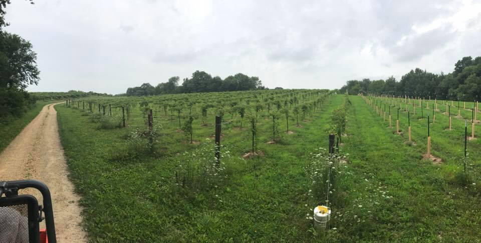 vineyard_view